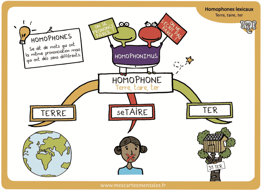 Homophone lexical TERRE TAIRE TER